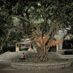 Chinese Wishing Tree