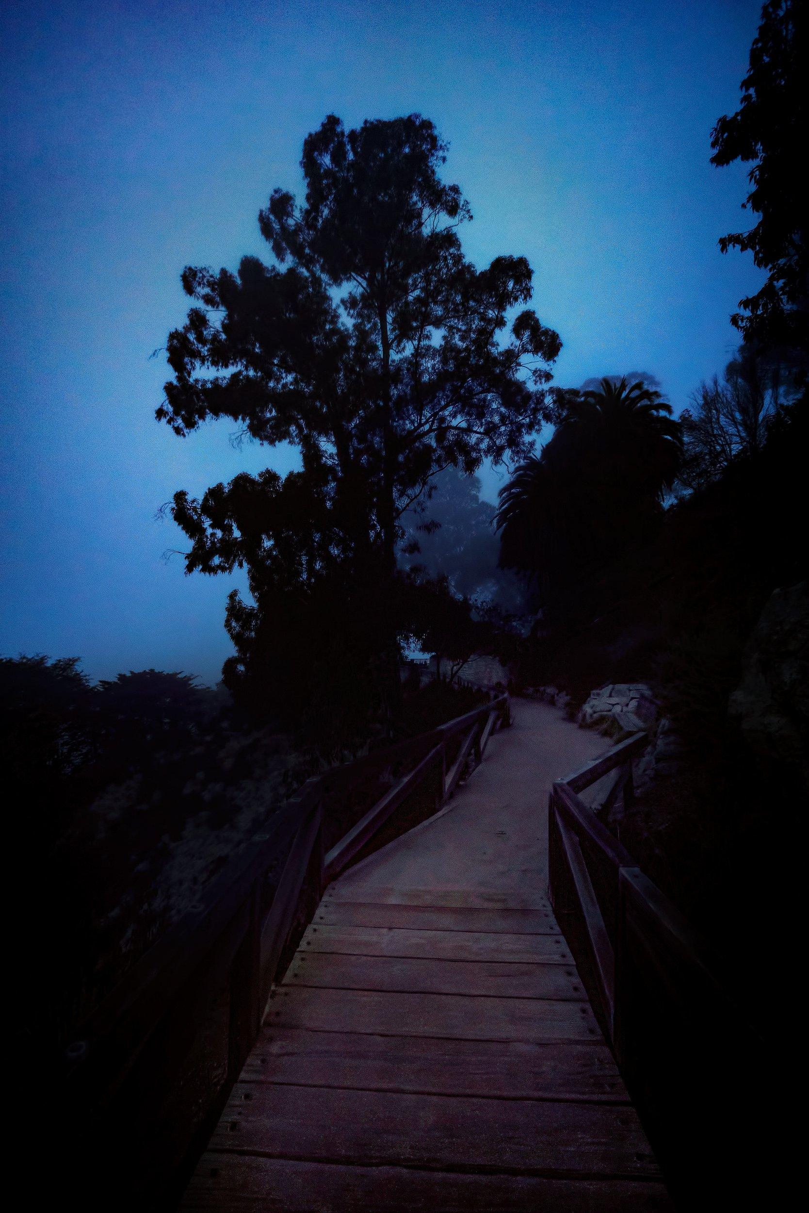 McWay Falls Trail at Julia Pfeiffer Burns State Park