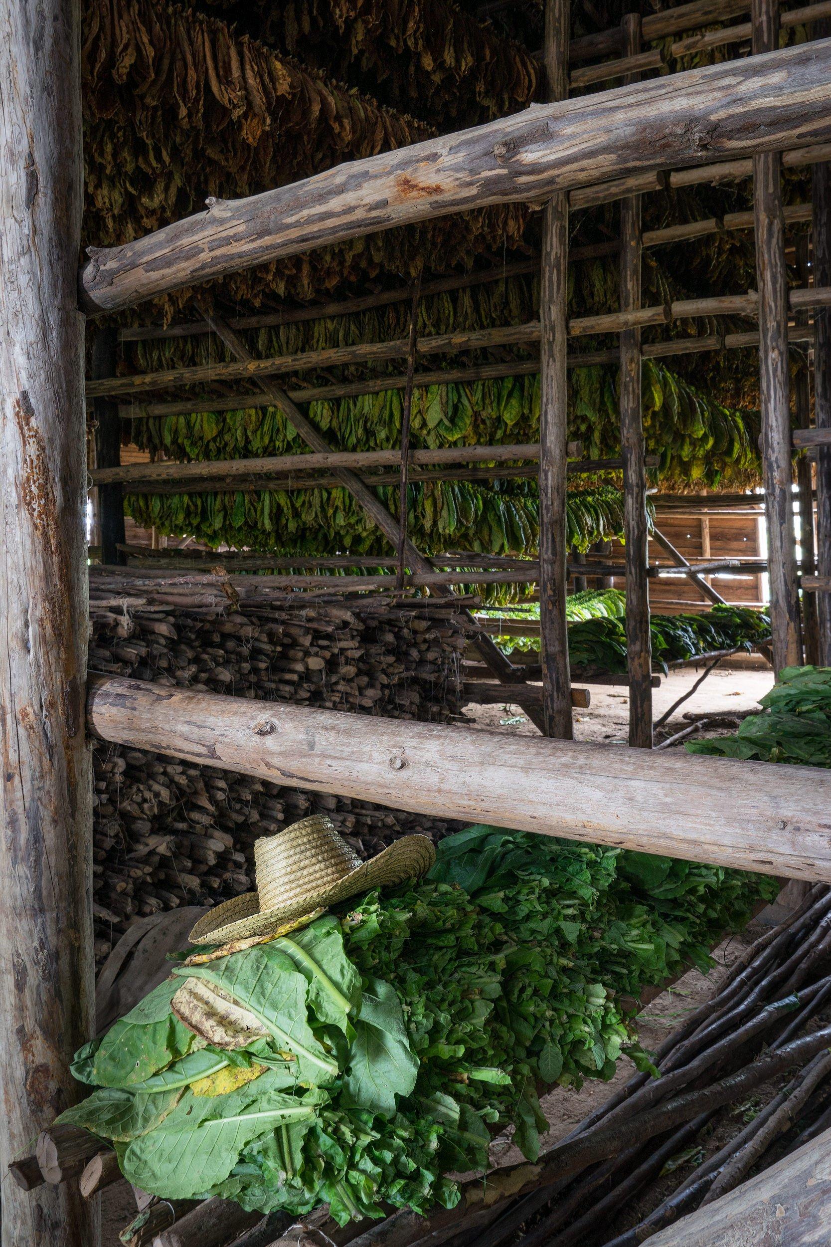 Tobacco House in Cuba