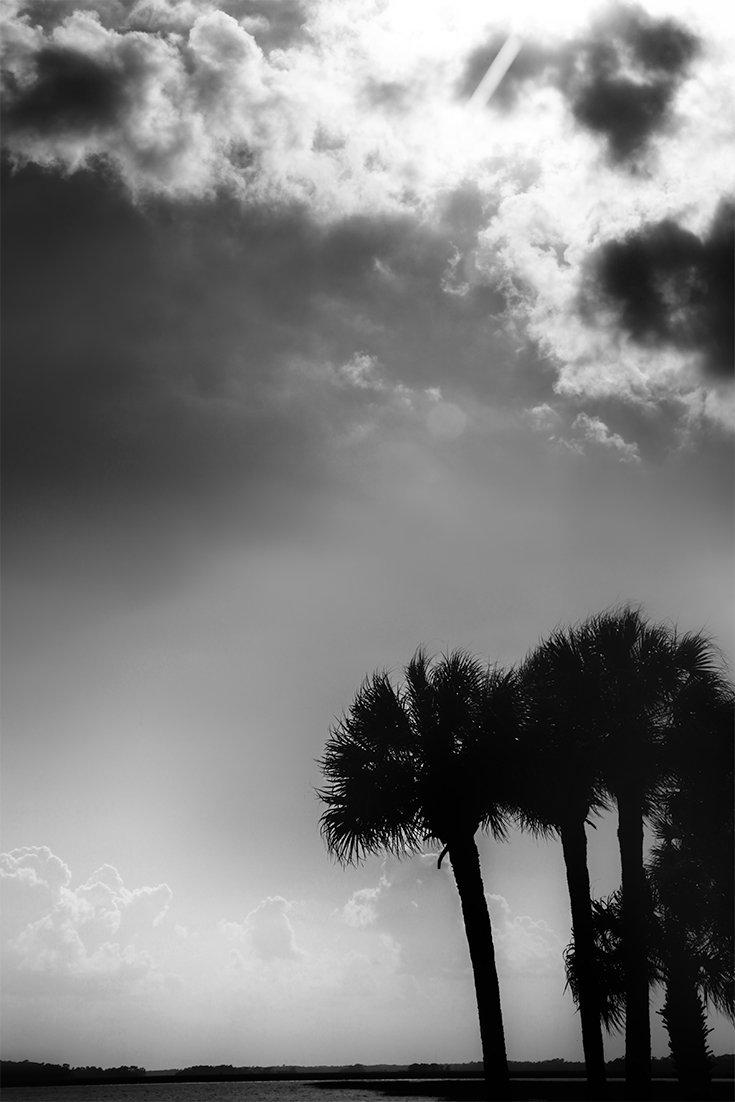 A Monotone Day at the Coast