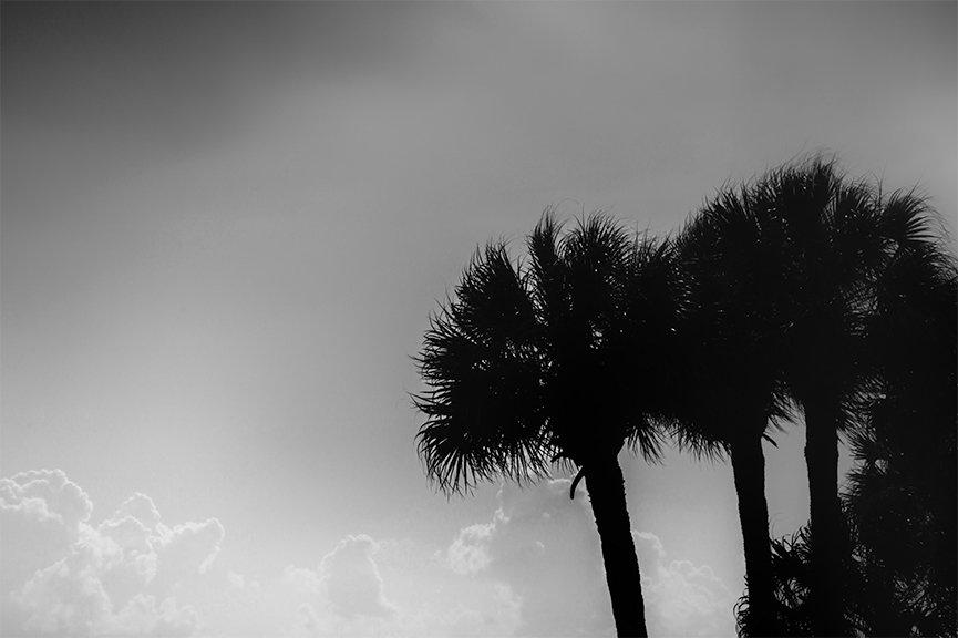 Monotone day at the coast