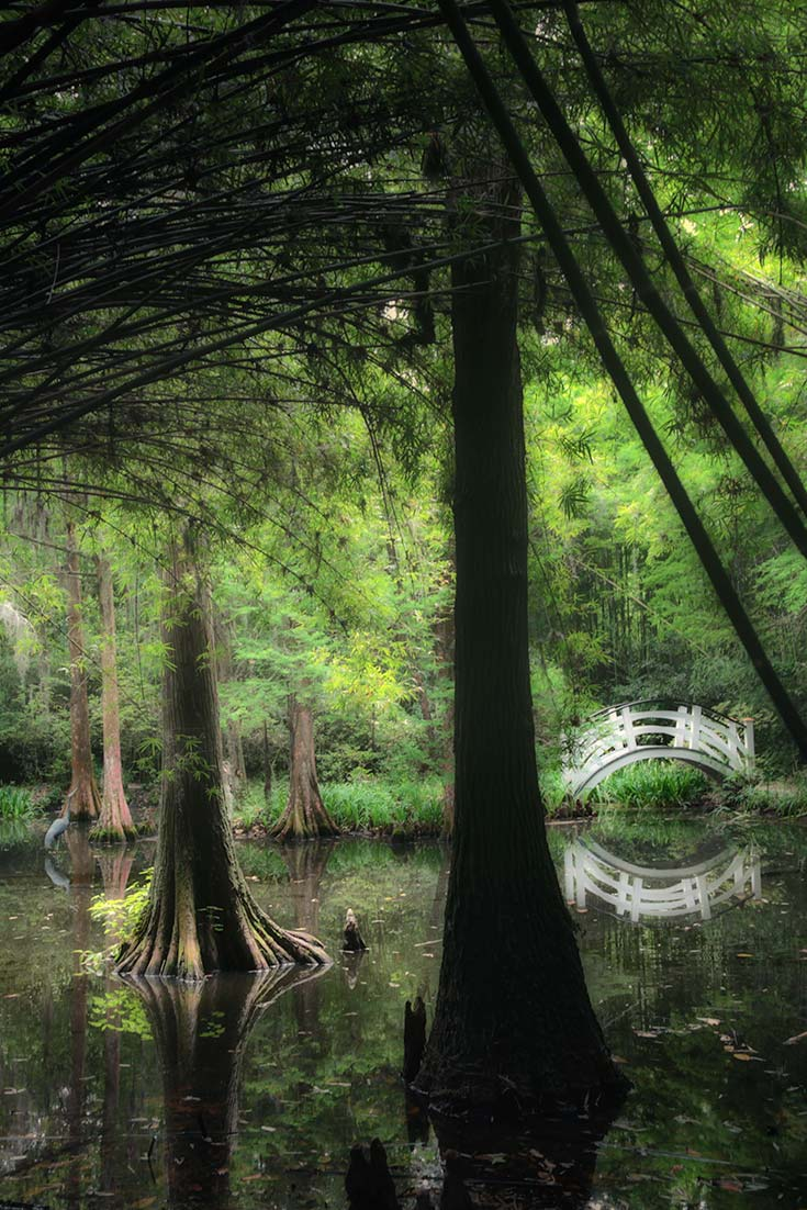 Swamps of Magnolia Plantation