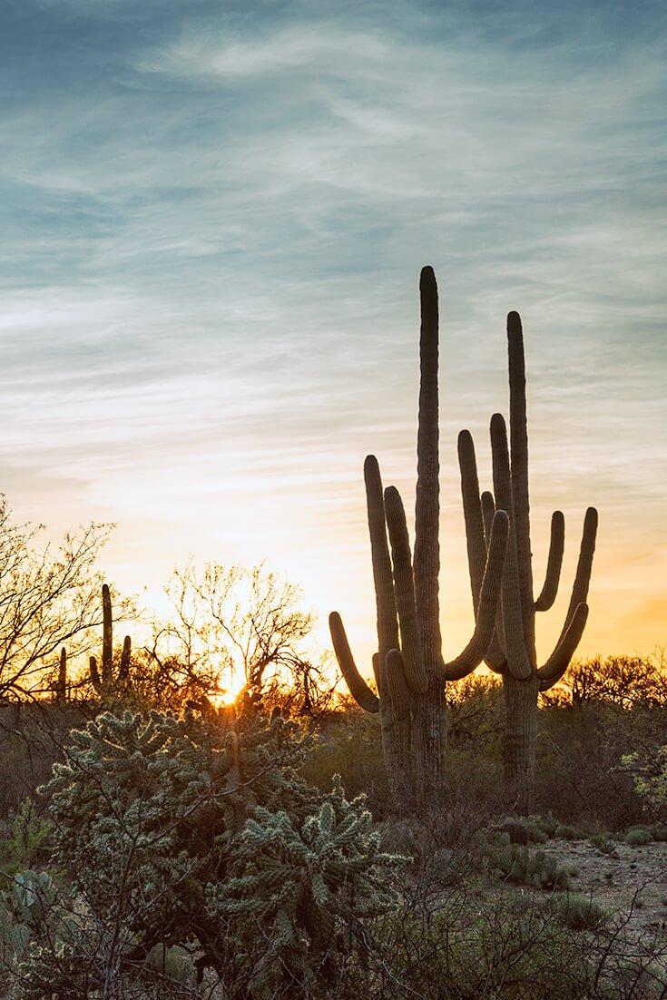 Tucson Desert at Sunset