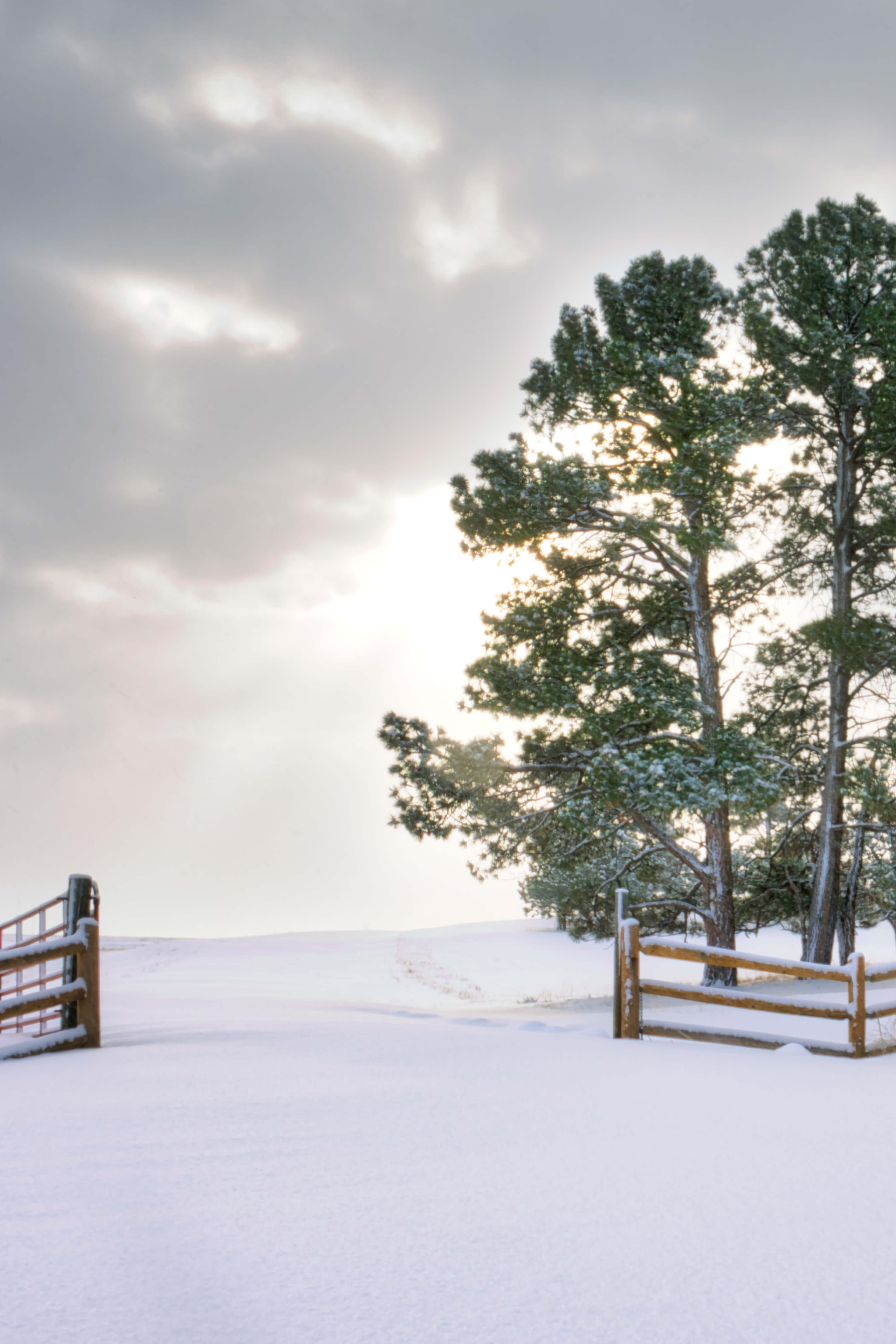 A snowy pasture with a fresh blanket of snow on a crisp morning in Northern Colorado. Sometimes it pays to wake up early.