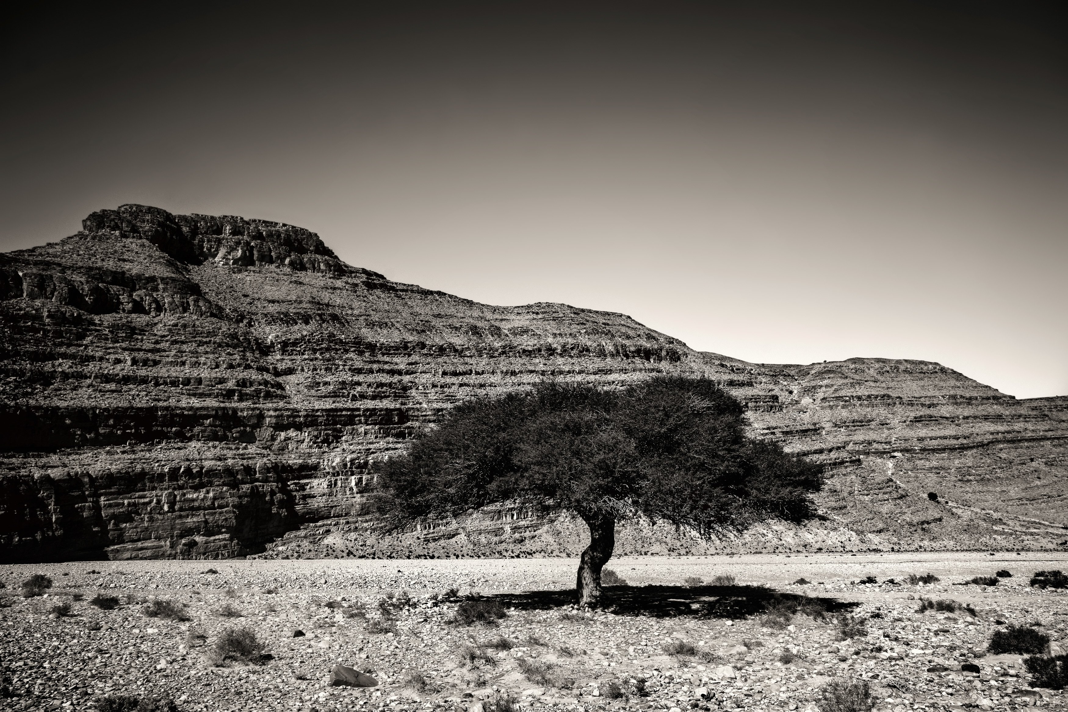Lone Argan Tree in Southern Morocco sepia from Kevin Wenning Intentionally Lost #intentionallylost