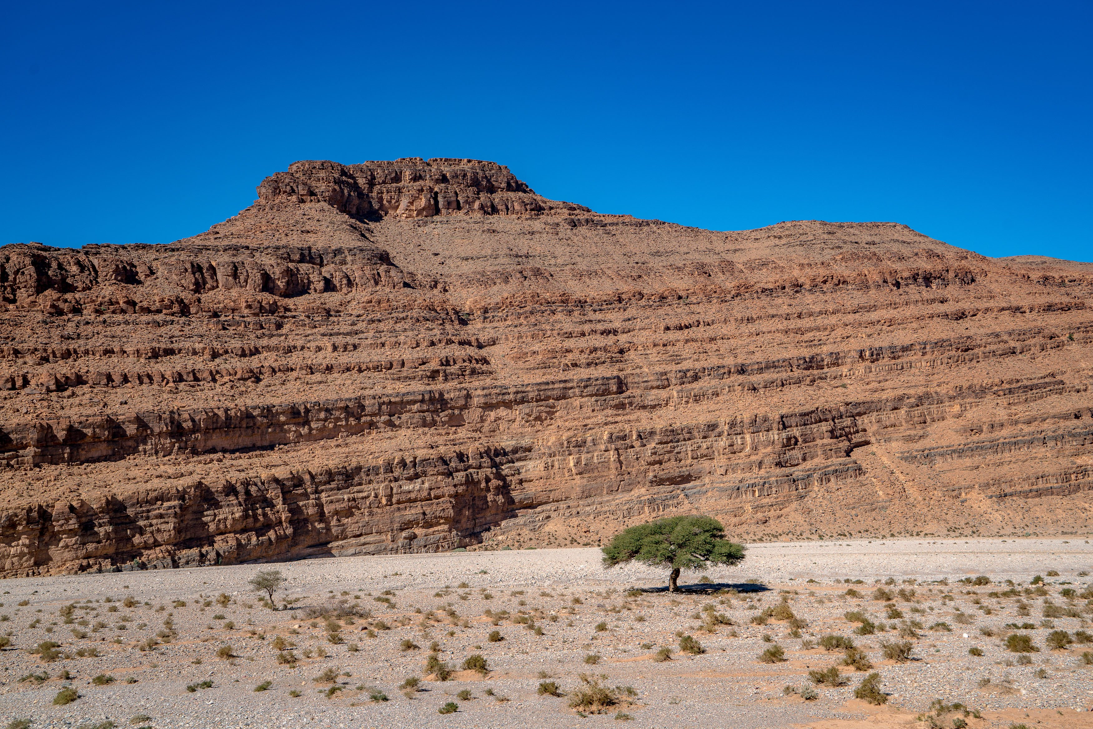 Lone Argan Tree in Southern Morocco unedited from Kevin Wenning Intentionally Lost #intentionallylost