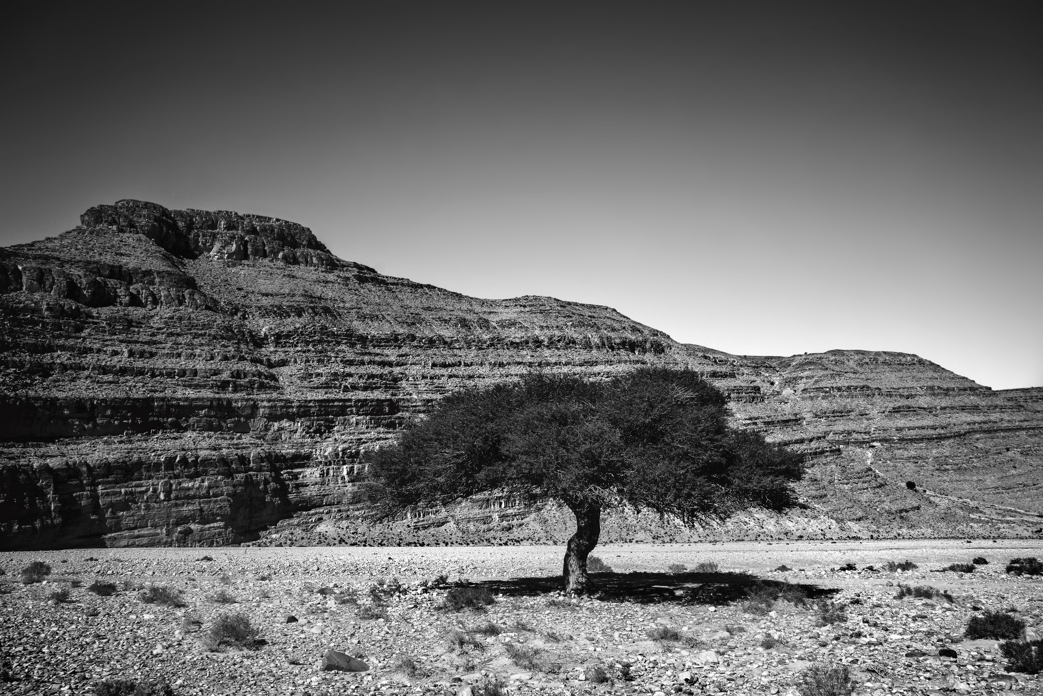Lone Argan Tree in Southern Morocco black and white from Kevin Wenning Intentionally Lost #intentionallylost