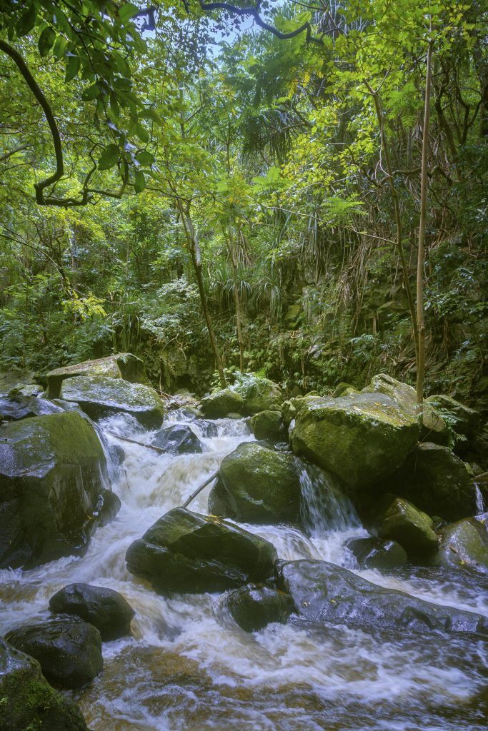 Hiilawe Stream after a rainfall in Waipio Valley Hawaii with Intentionally Lost and Kevin Wenning #intentionallylost