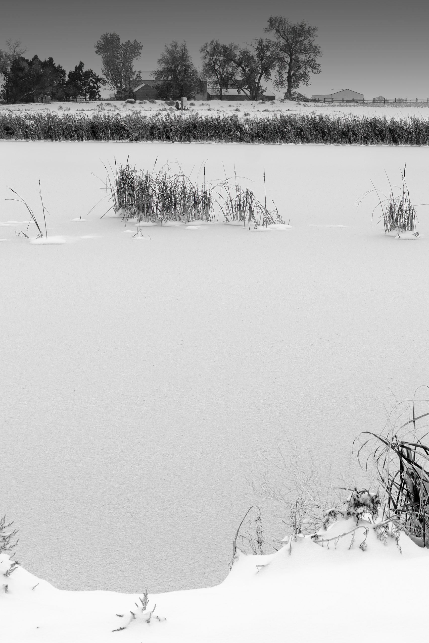 Frozen Winter Pond at the Farmhouse